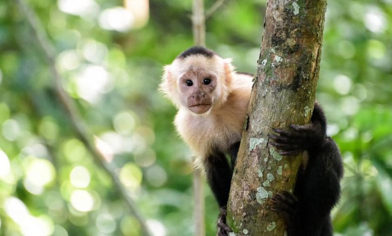 cincinnati monkeys 01 DcQmQrnow-trending