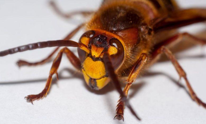 200503015652 01 murder hornet super 169 cU9FCjnow-trending