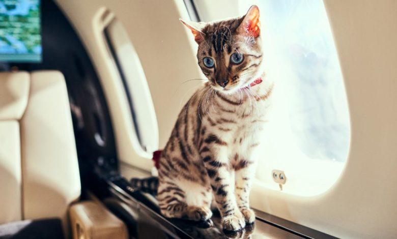 210913155657 03 pets travel airplane super 169 y4TfObnow-trending