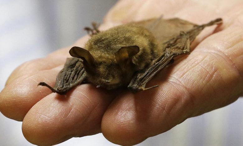 Tiny Bats AP 1 nJ05yJnow-trending