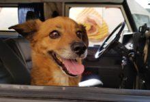 211021163040 11 cinque terre flood dog rescue super 169 hHmkKvnow-trending